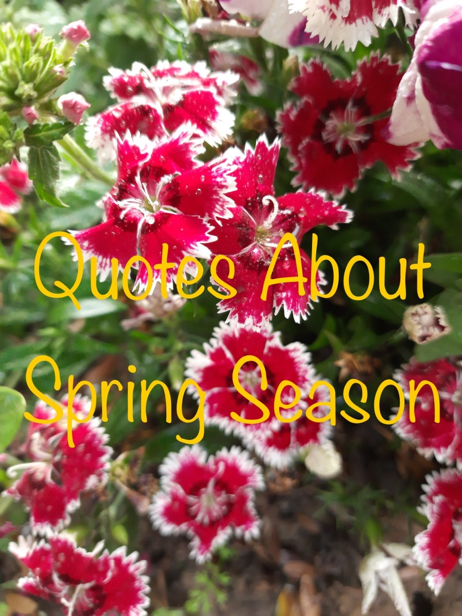 21 Quotes to Celebrate the Spring Season