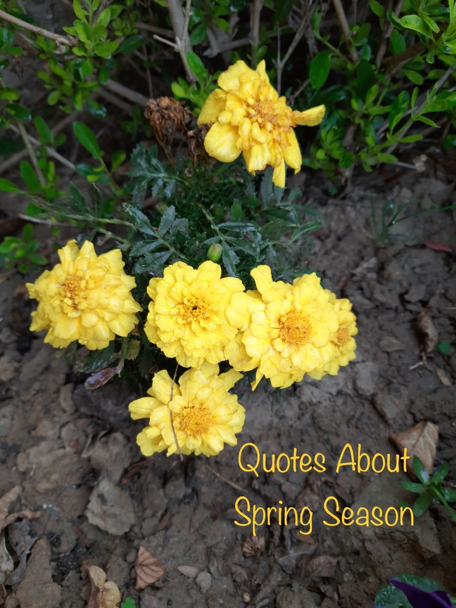 Quotes about the Spring Season