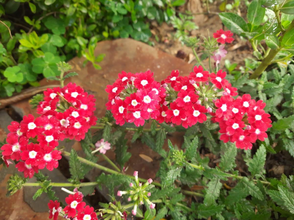 Spring Season knocking at my door—My garden flowers