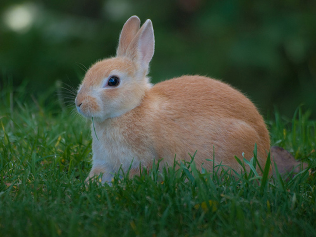 A bunny is a classic addition to an Easter photo shoot.