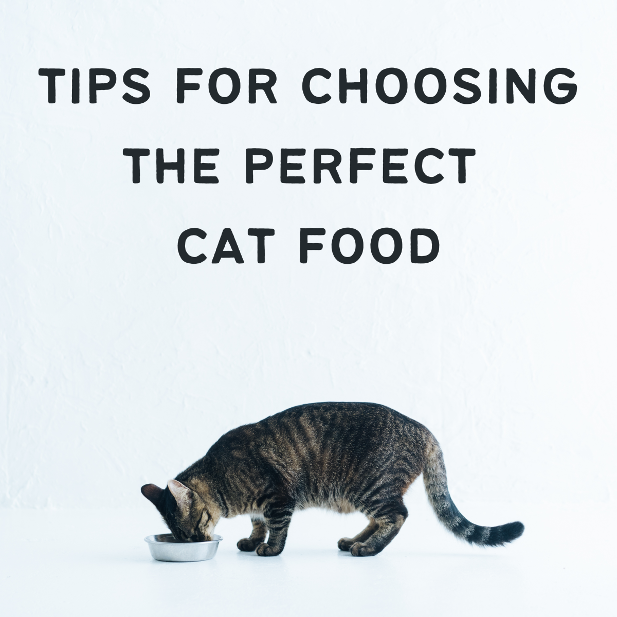 How to Choose the Best Cat Food for Your Cat