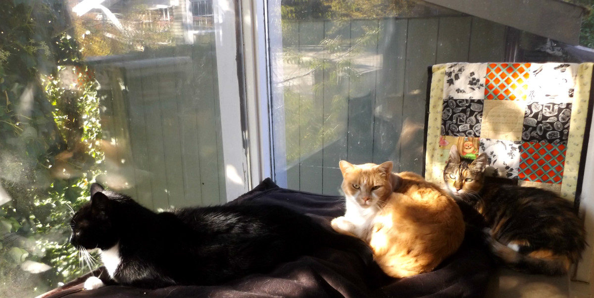 Tyson, Sunshine and Lily napping in the sunroom. My spoiled rotten cats also have their own, enclosed kitty veranda (with real grass!) so they can go outside at will.