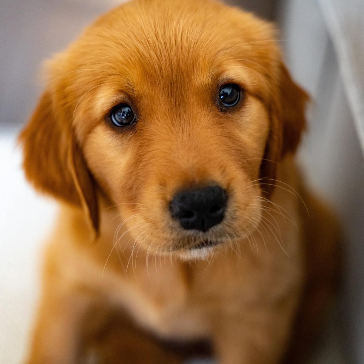 when-do-puppies-open-their-eyes