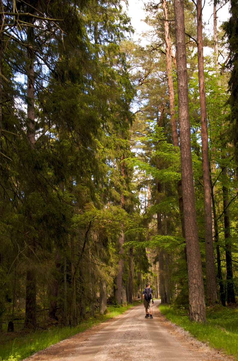 Trekking through the deep pine forests of South Sweden...