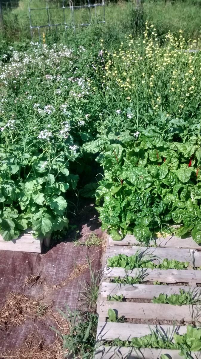 raised-garden-beds-pallets