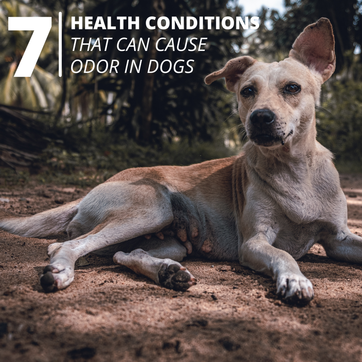 If your dog smells bad for no good reason, he may have an underlying health issue that needs to be addressed immediately.