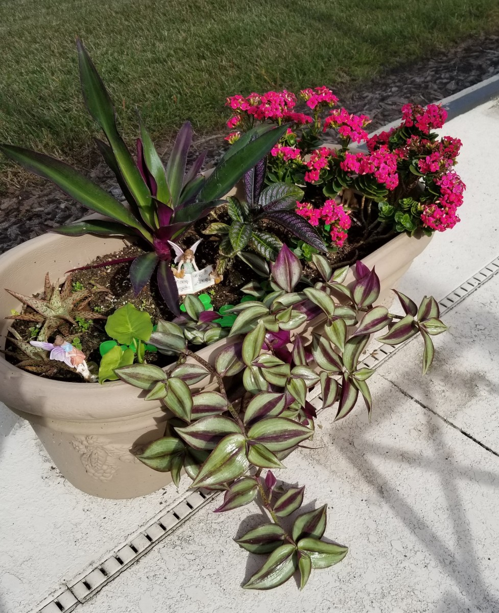 This container has Persian Passion, Moses in the Cradle, and the trailing Tradescantia zebrina adjacent to a pink flowering plant.