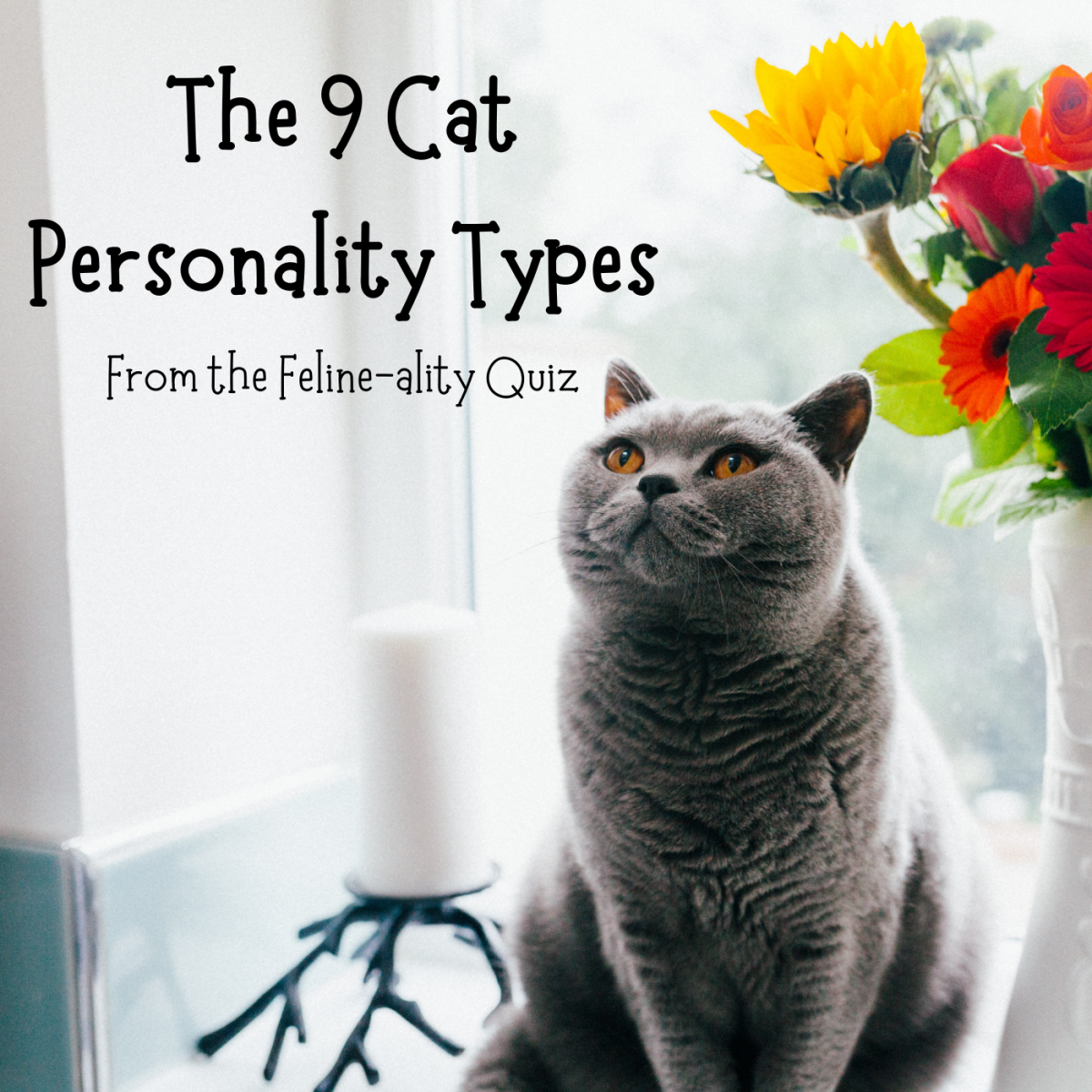 This cat probably has an orange personality type—but what does that mean? Learn more about the Meet Your Match program and the Feline-ality assessment and what they reveal about cats.