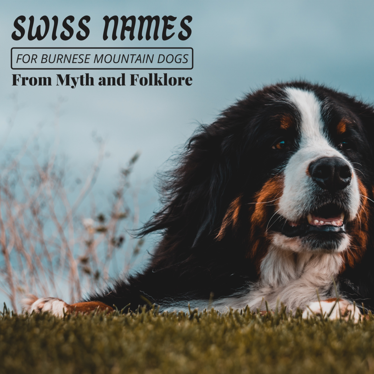 Why not give your Bernese Mountain Dog a genuine Swiss name from folklore?