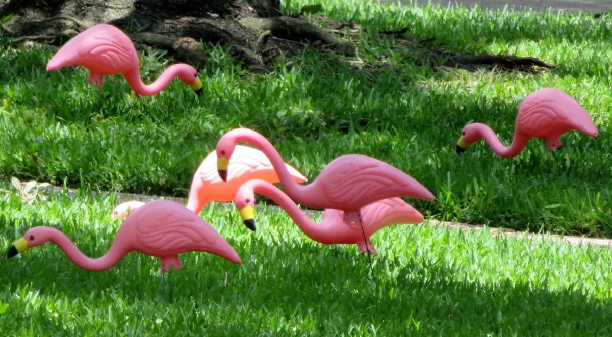 Pink Flamingos, Kitsch Art, and IG Nobel Prizes