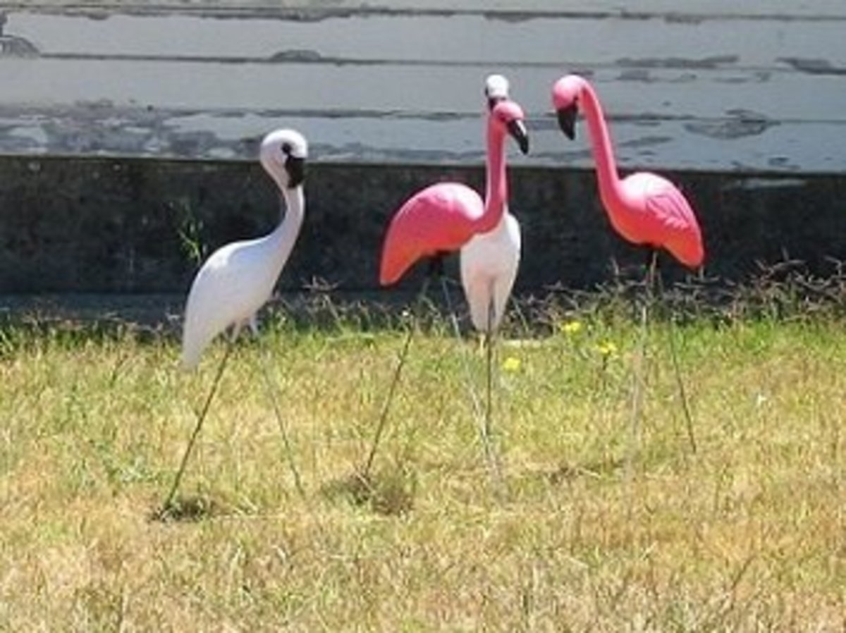 Pink Flamingos, Kitsch Art and IG Nobel Prizes