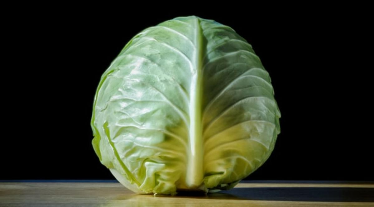 can-dogs-eat-cabbage