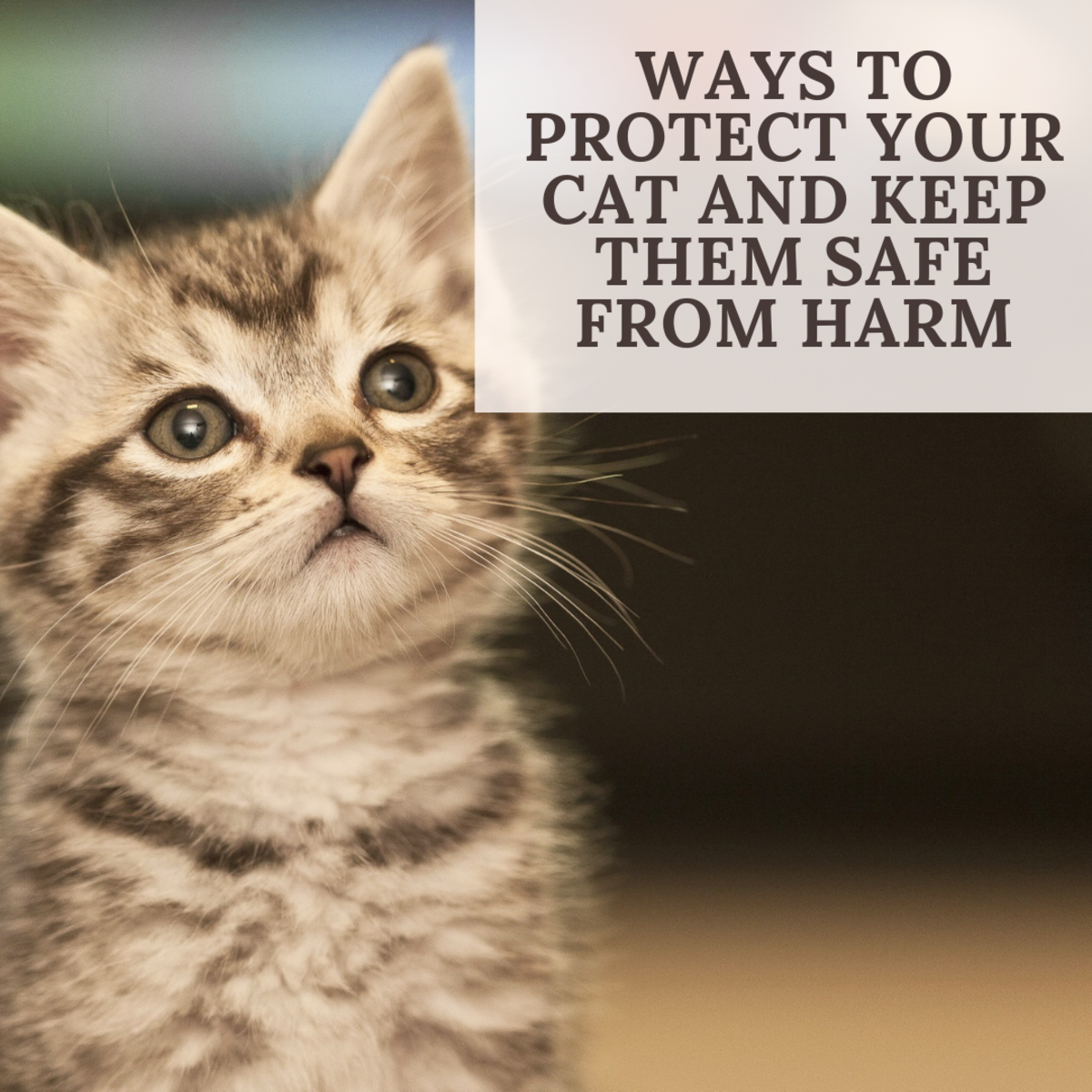 There are many ways to make the world a safer place for your kitty!