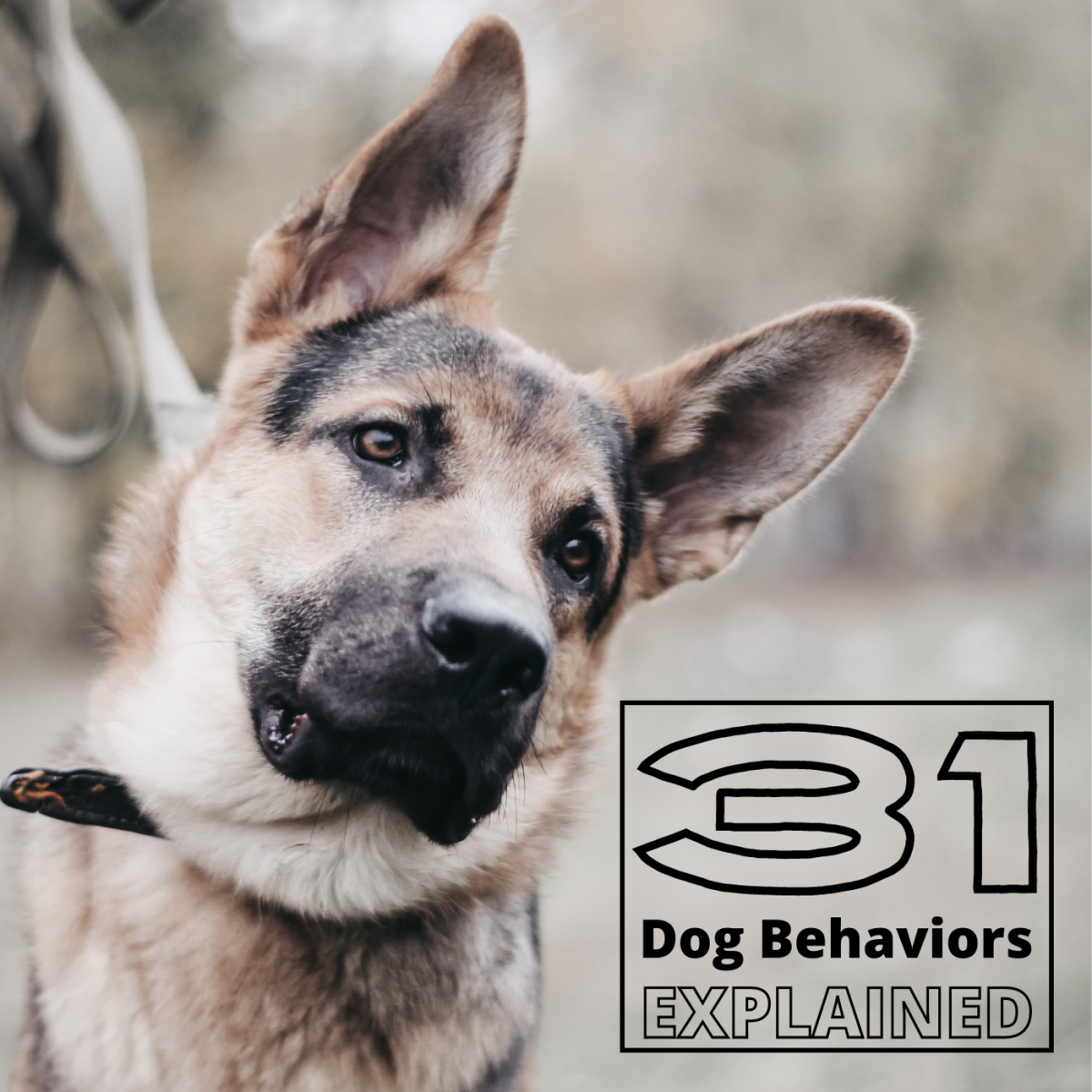 31 Dog Behaviors and What They Mean