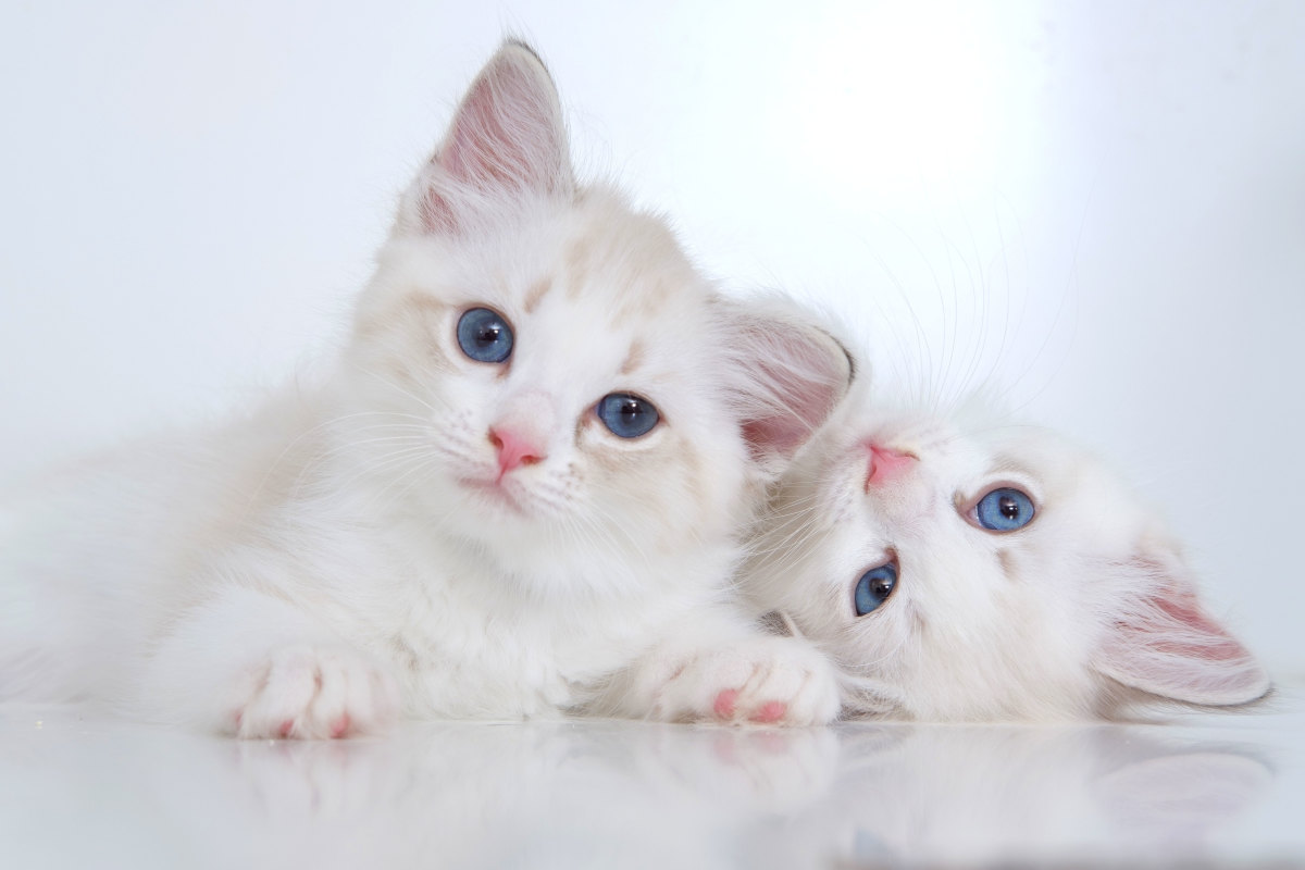 What would be the best name for these two furry furballs?