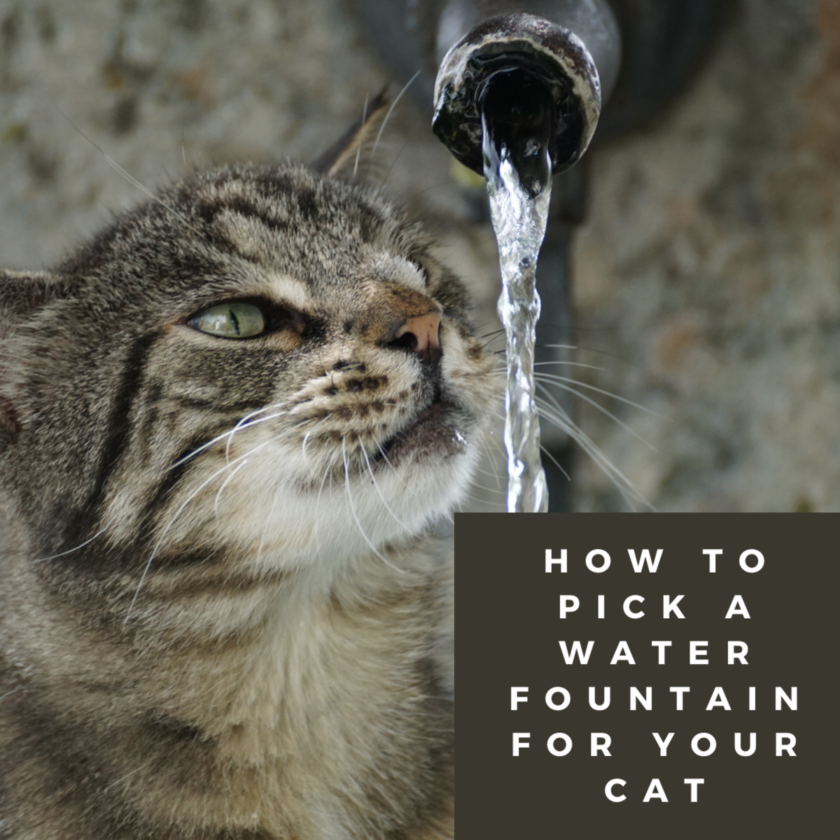 Are you looking for a drinking fountain for your cat?