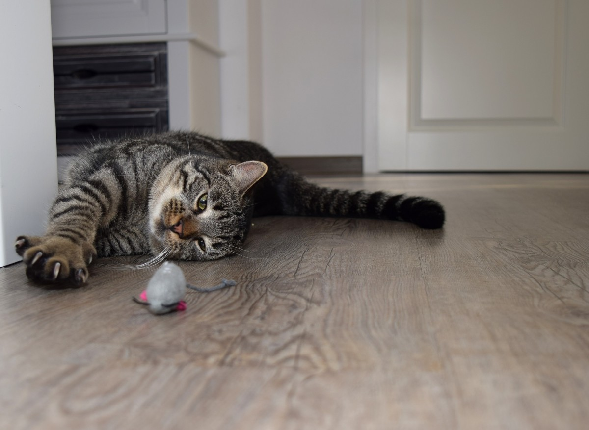 household-items-that-are-dangerous-to-your-cat