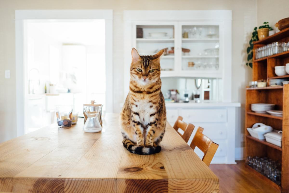 7 Household Items That Are Dangerous to Your Cat