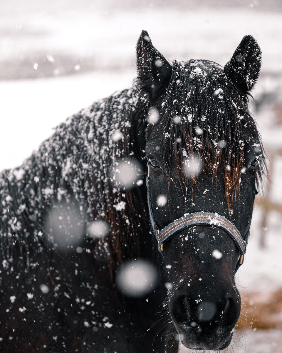 How to prepare a horse for a storm.