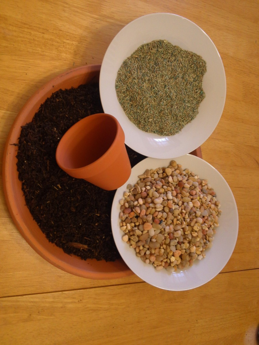 Ingredients for the resurrection garden.