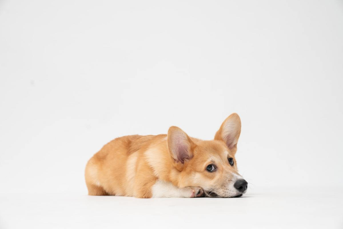 Puppies With Hiccups: Reasons & What To Do
