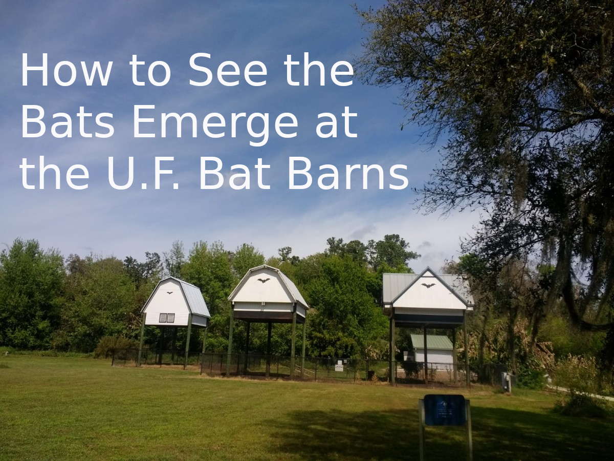 Watching the bats come out at sundown is great fun. For information and advice, read on...