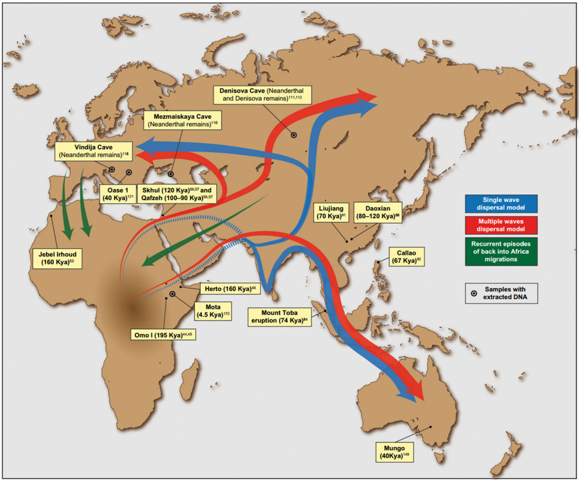Early Human Migration From East Africa and Constant Intermingling Over the Centuries: Linguistic Evidence
