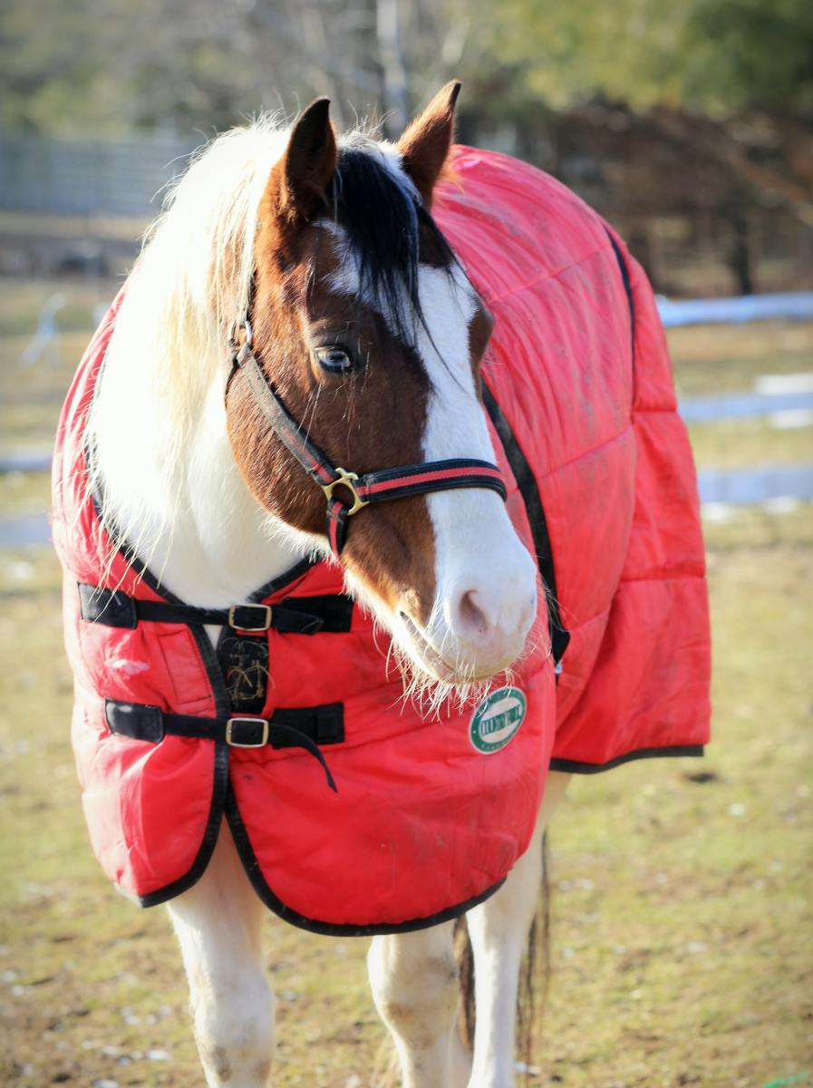 Horses Have a Thick Winter Coat