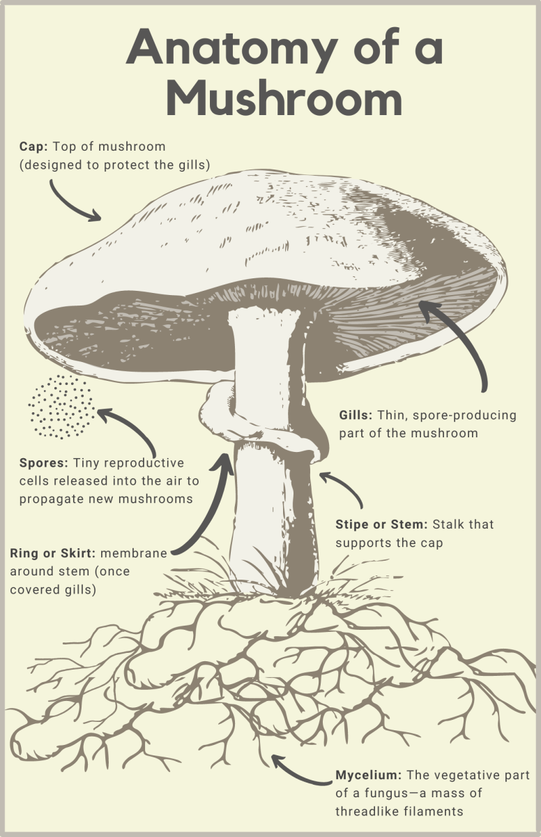 Whether they're feeding the grass or decomposing its clippings, mushrooms help keep your yard healthy.
