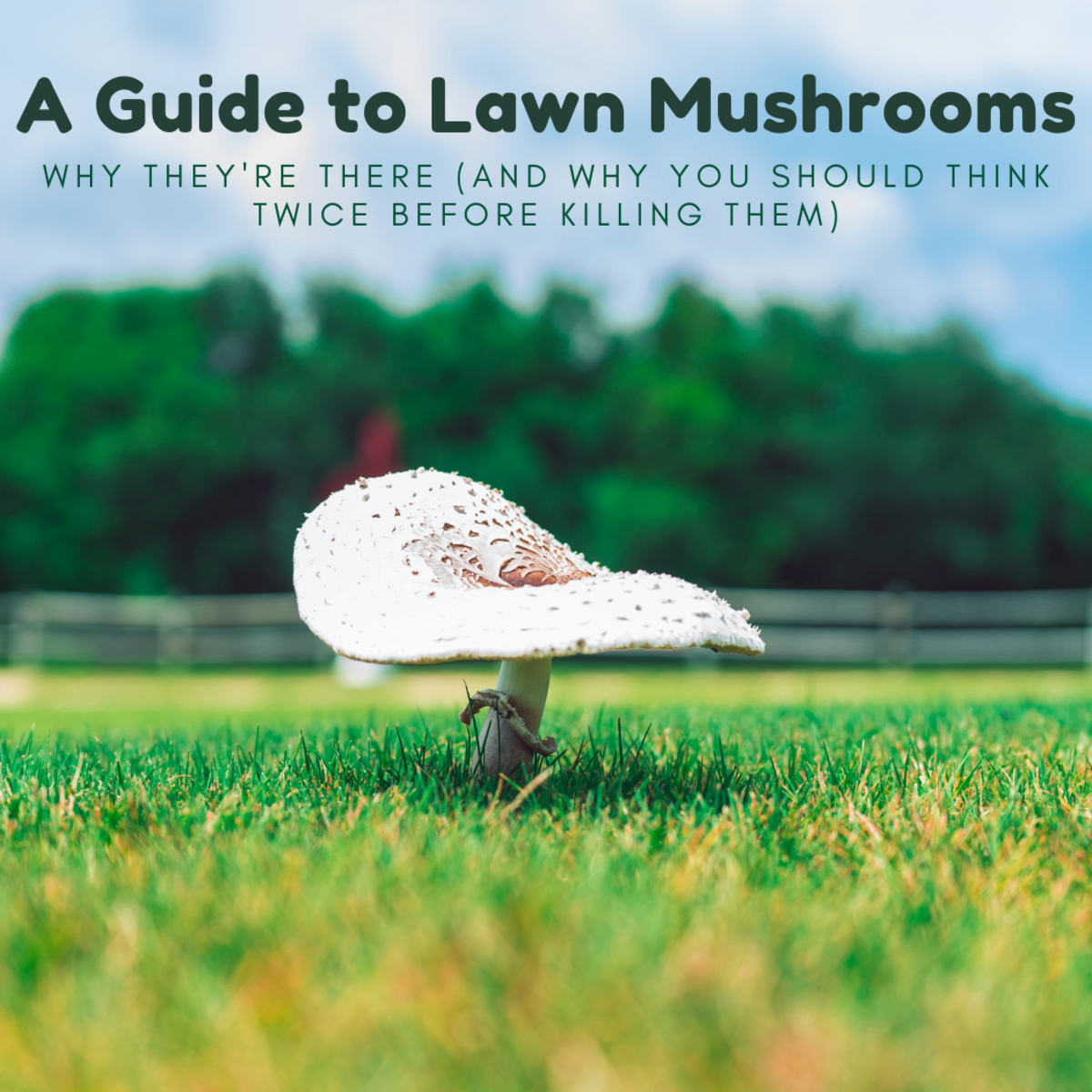 While there are several ways to get rid of lawn mushrooms (detailed below), other parts of your yard may suffer if you do.