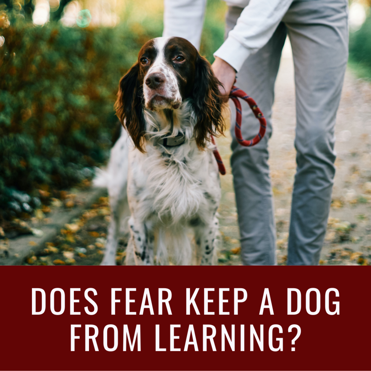 Does Fear Inhibit Learning in Dogs?