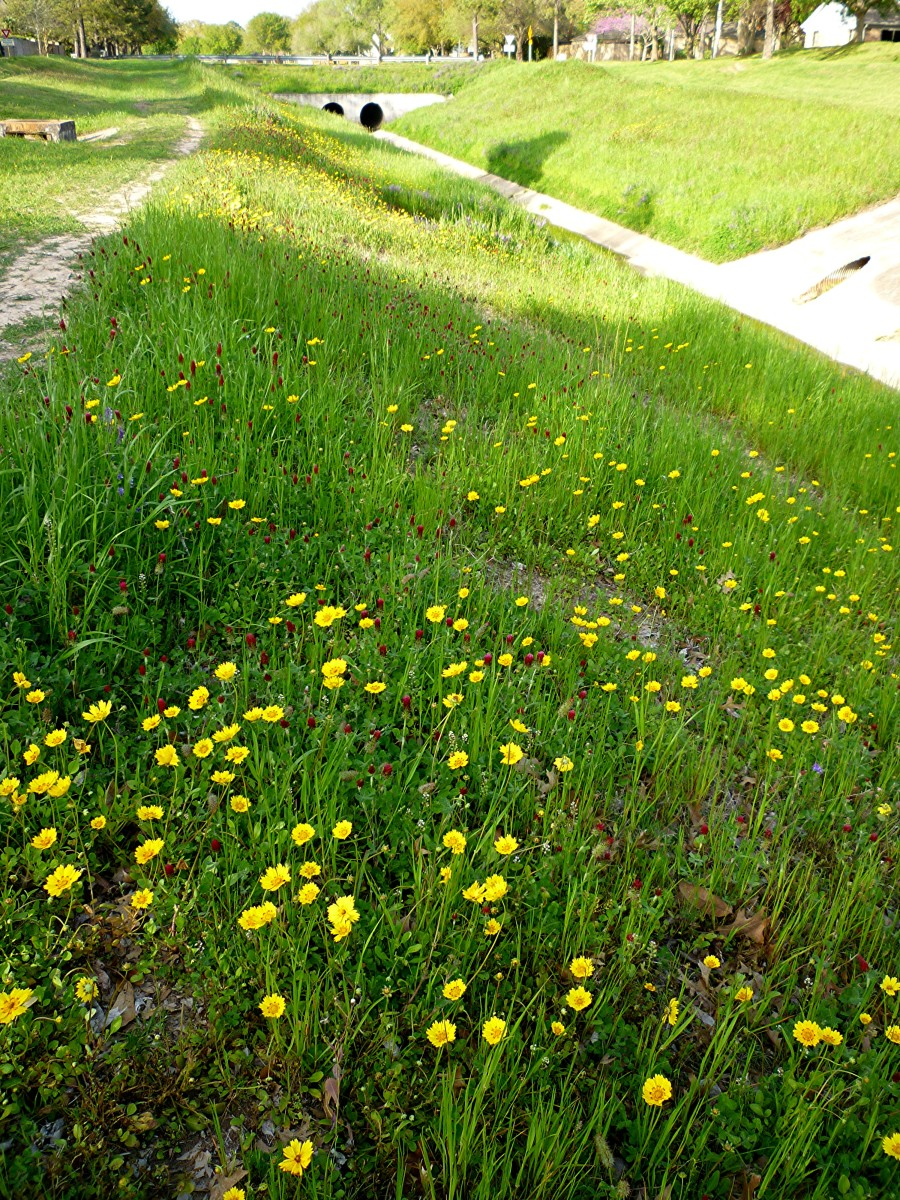 Greenbelt area with drainage ditch and wildflowers
