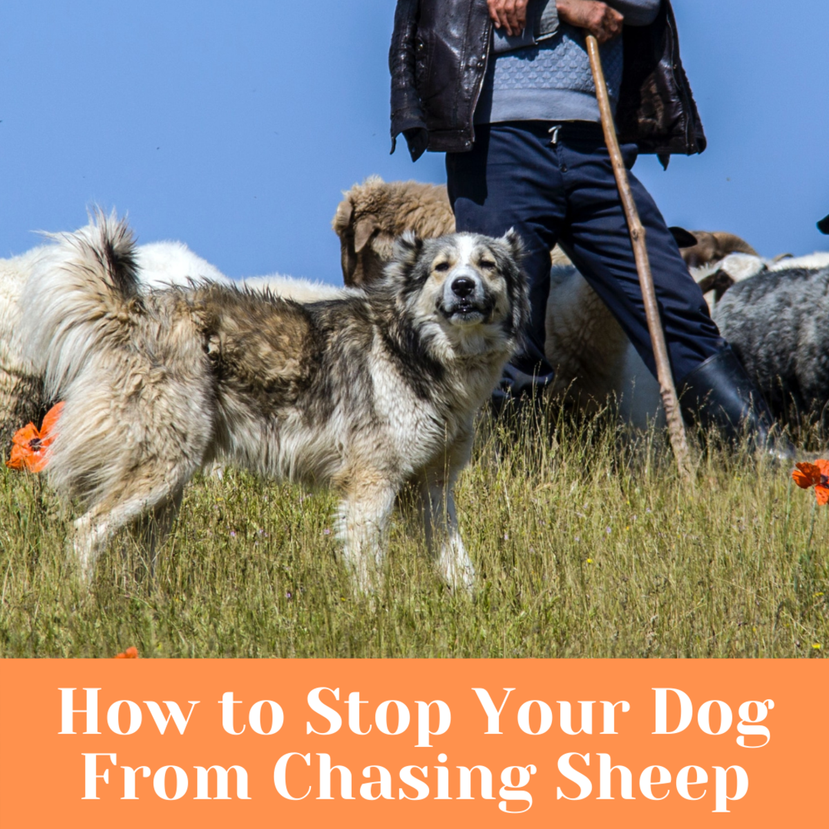 Help your dog with this behavior.