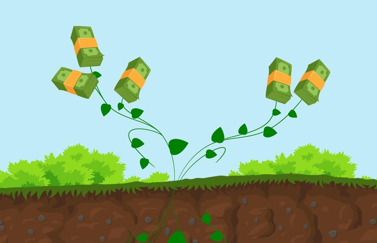 a money tree