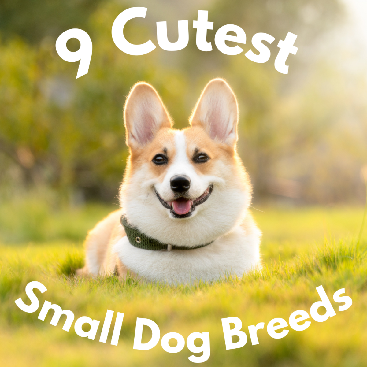 9 of the Cutest Small Dog Breeds
