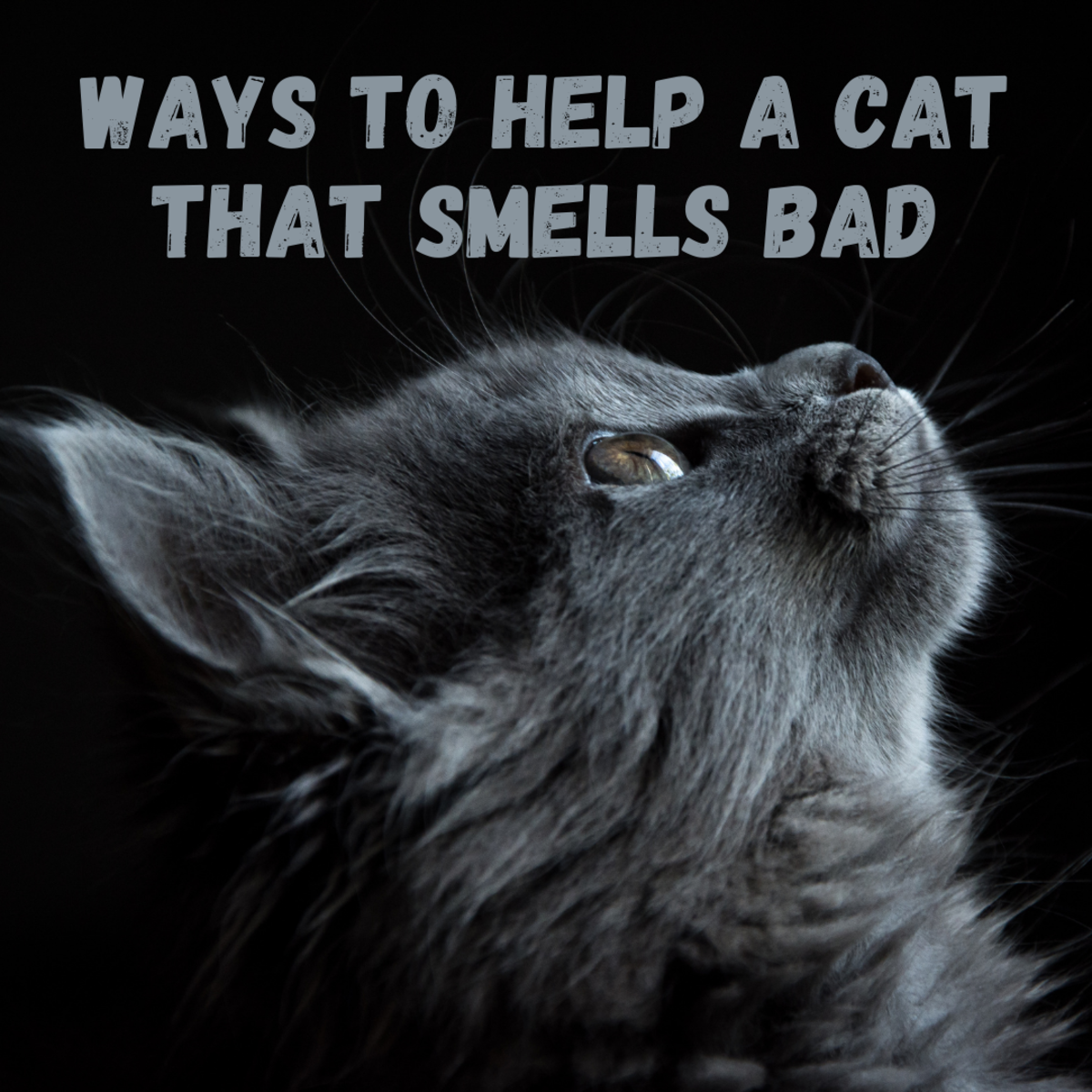 It's not natural for a cat to smell bad. Find out what might be wrong and how to fix it.