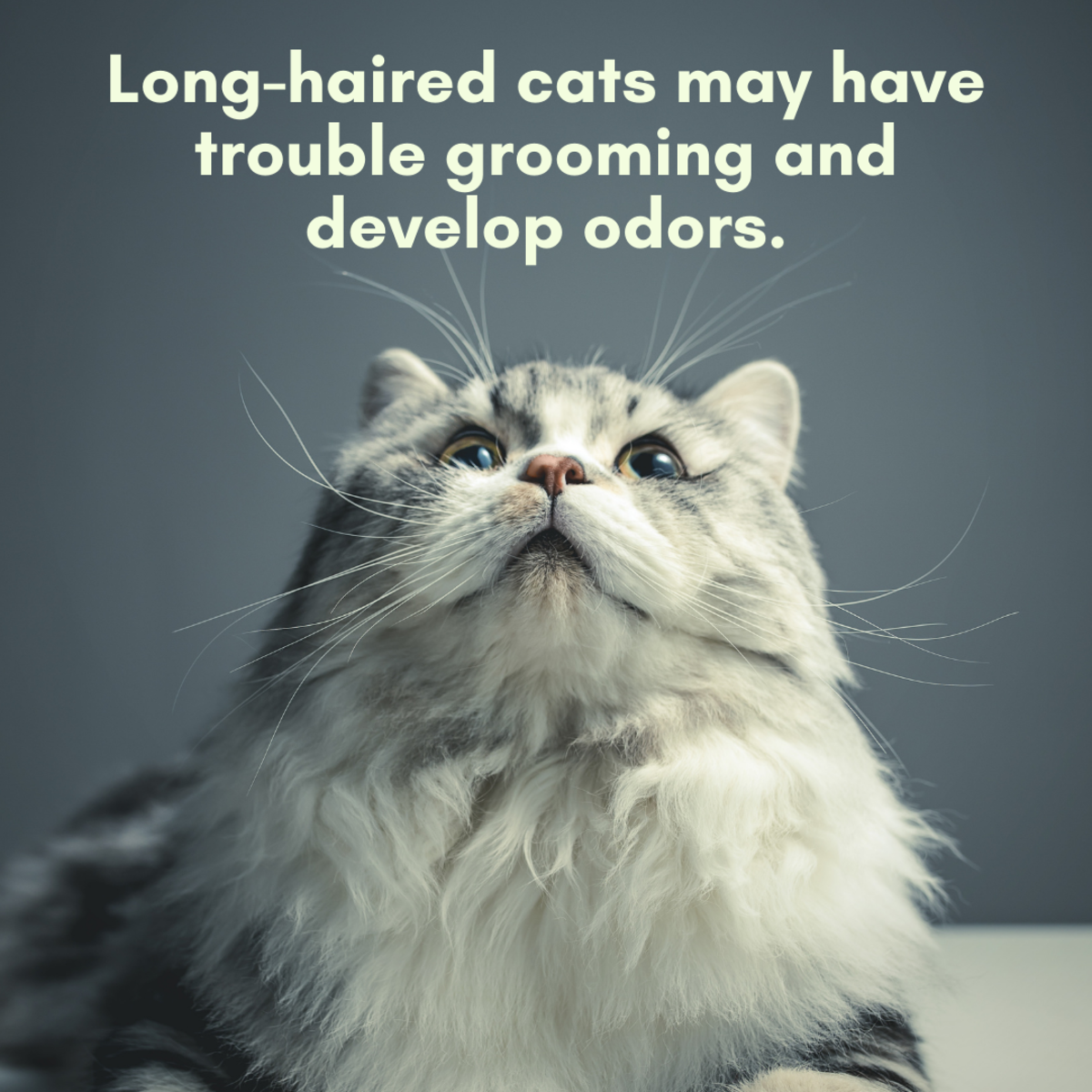 Some cats with long or dry fur may have trouble grooming it completely.