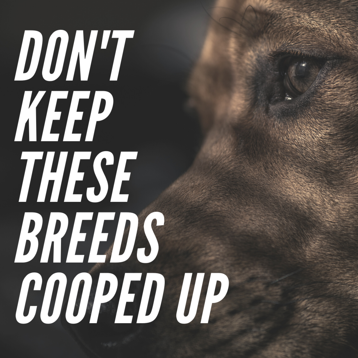 Match the right breed to your lifestyle.
