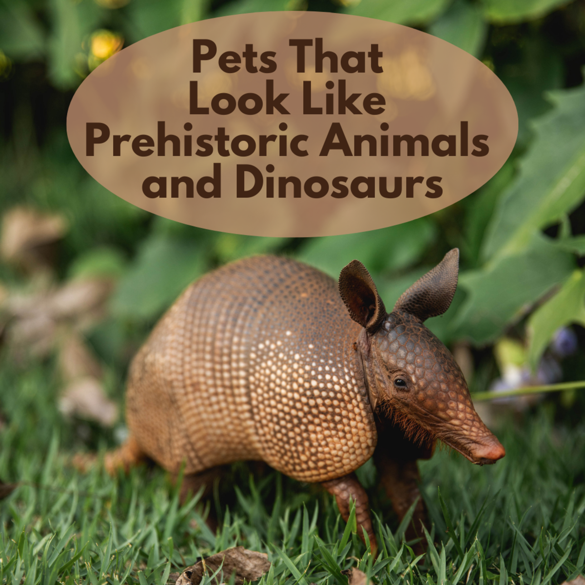 15 Pets You Can Own That Look Like Dinosaurs and Prehistoric Animals