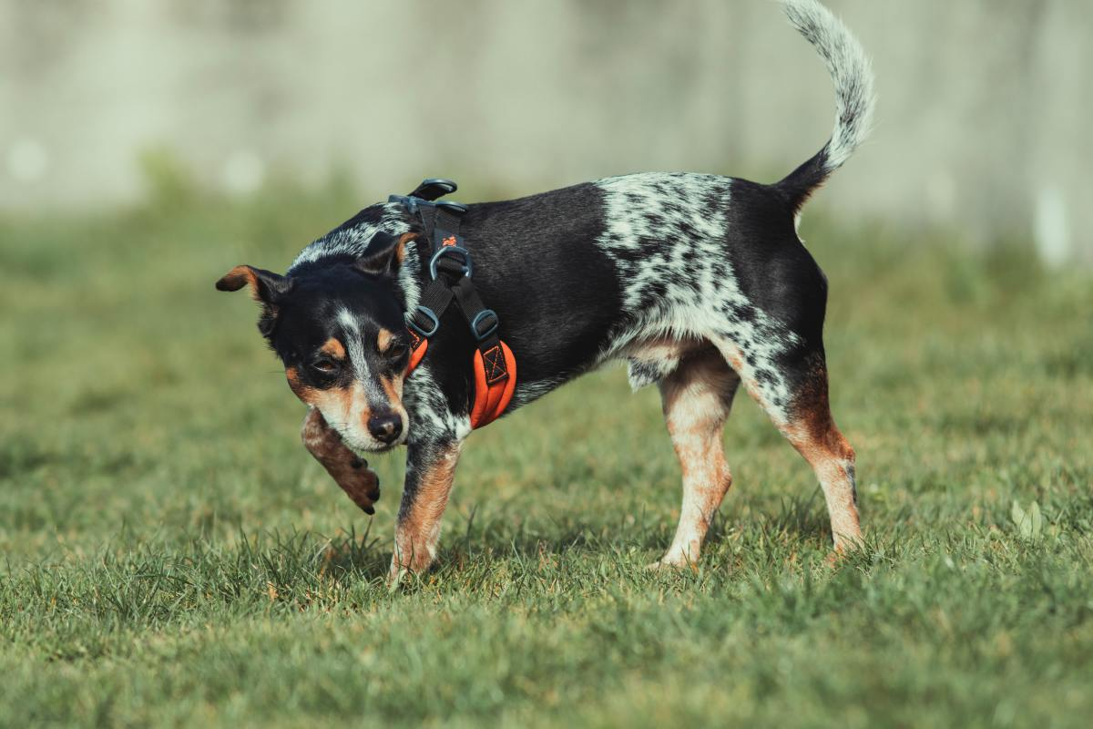 Use odor to your advantage. Place a stool sample in the area of your yard that you would like your puppy to use for pottying.
