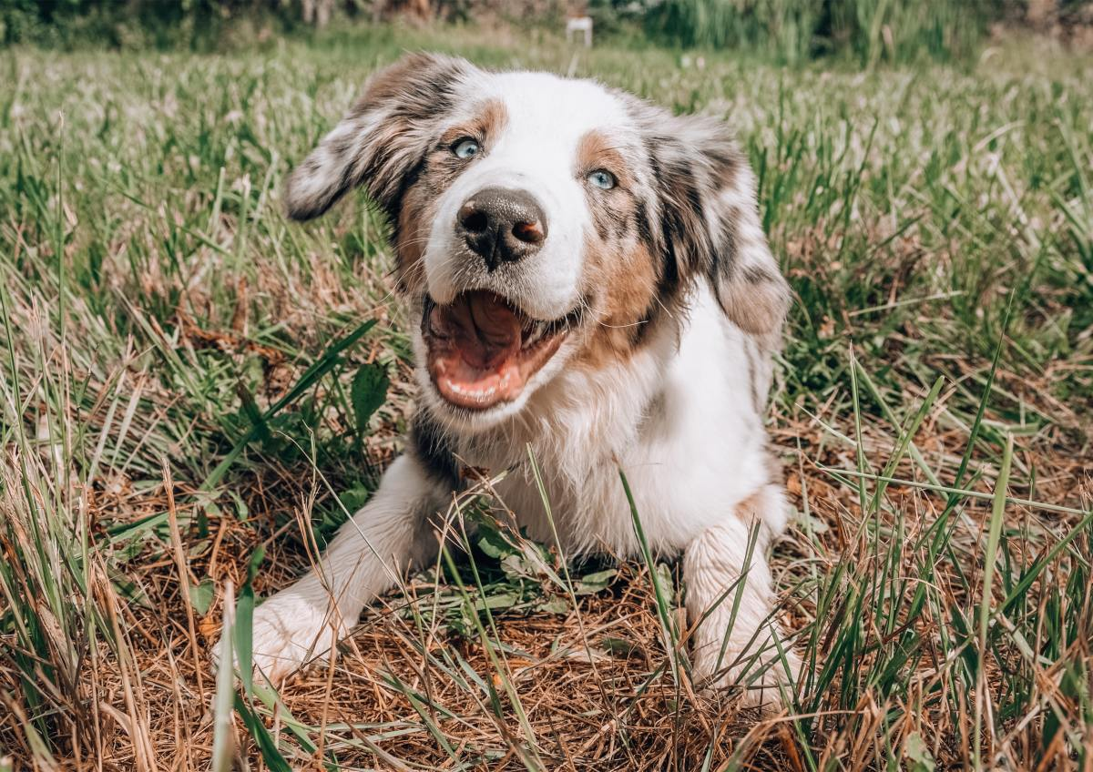 Dogs are thought to align with the Earth's magnetic field while pooping.