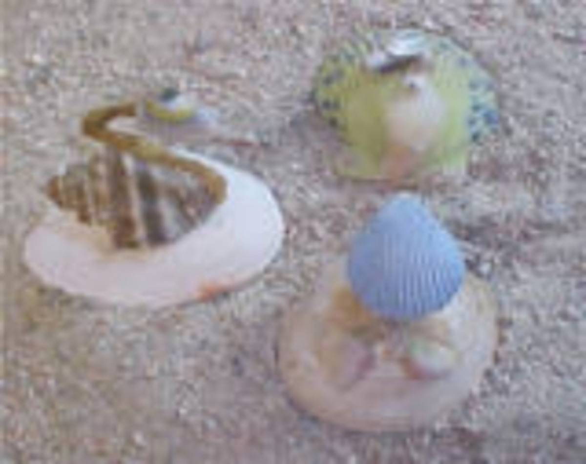 the-virtues-of-collecting-identifying-seashells-atlantic-ocean