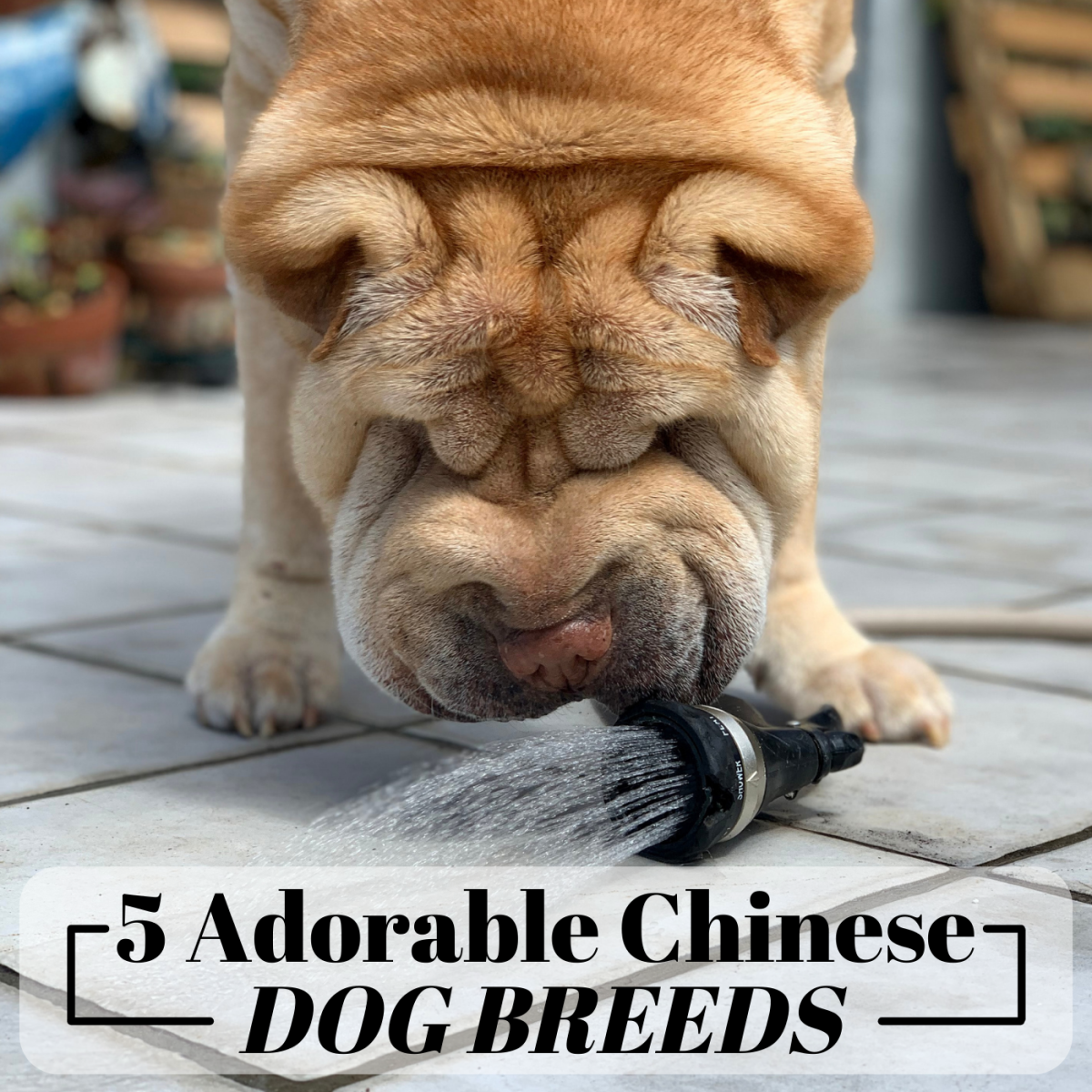 The 5 Most Popular Dog Breeds in China