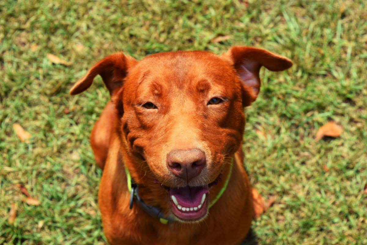 Visiting the kennel with your dog a time or two before you leave on your trip can help reduce anxiety when you drop your dog off for real.