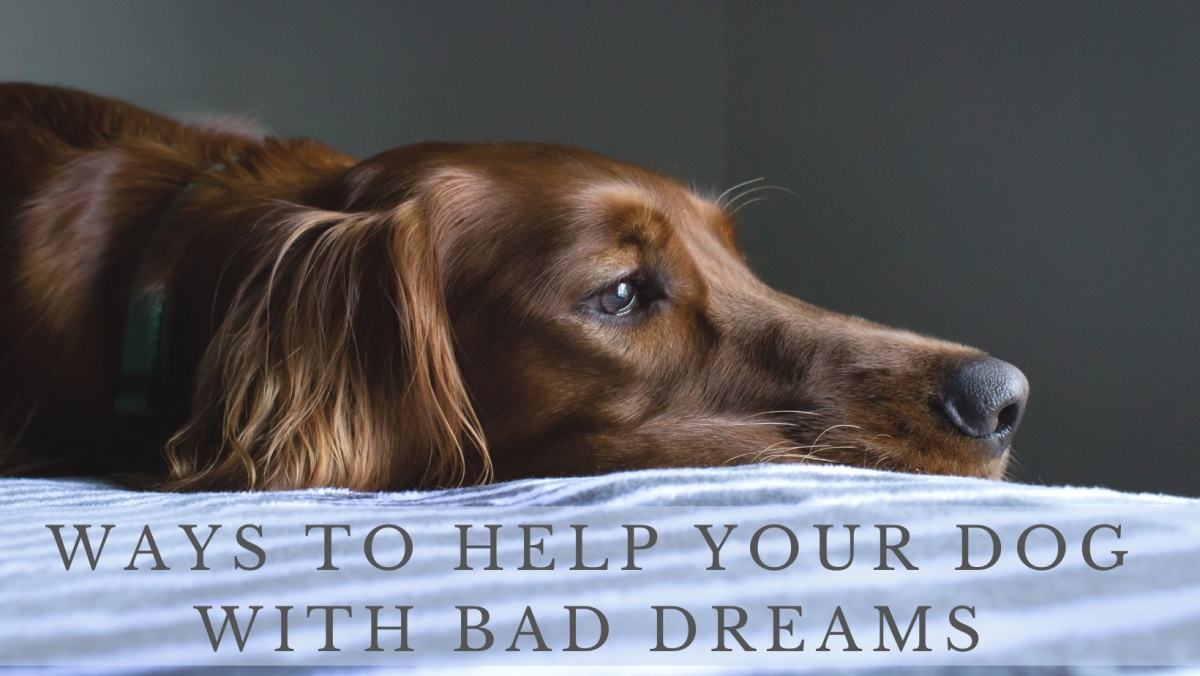 Learn to help manage your dog's bad dreams.