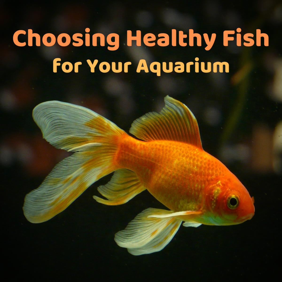 Fish-Buying Tips: How to Choose Healthy Aquarium Fish