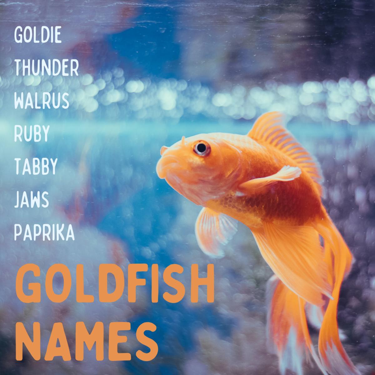 50+ Creative Goldfish Names From Blaze to Twinkie