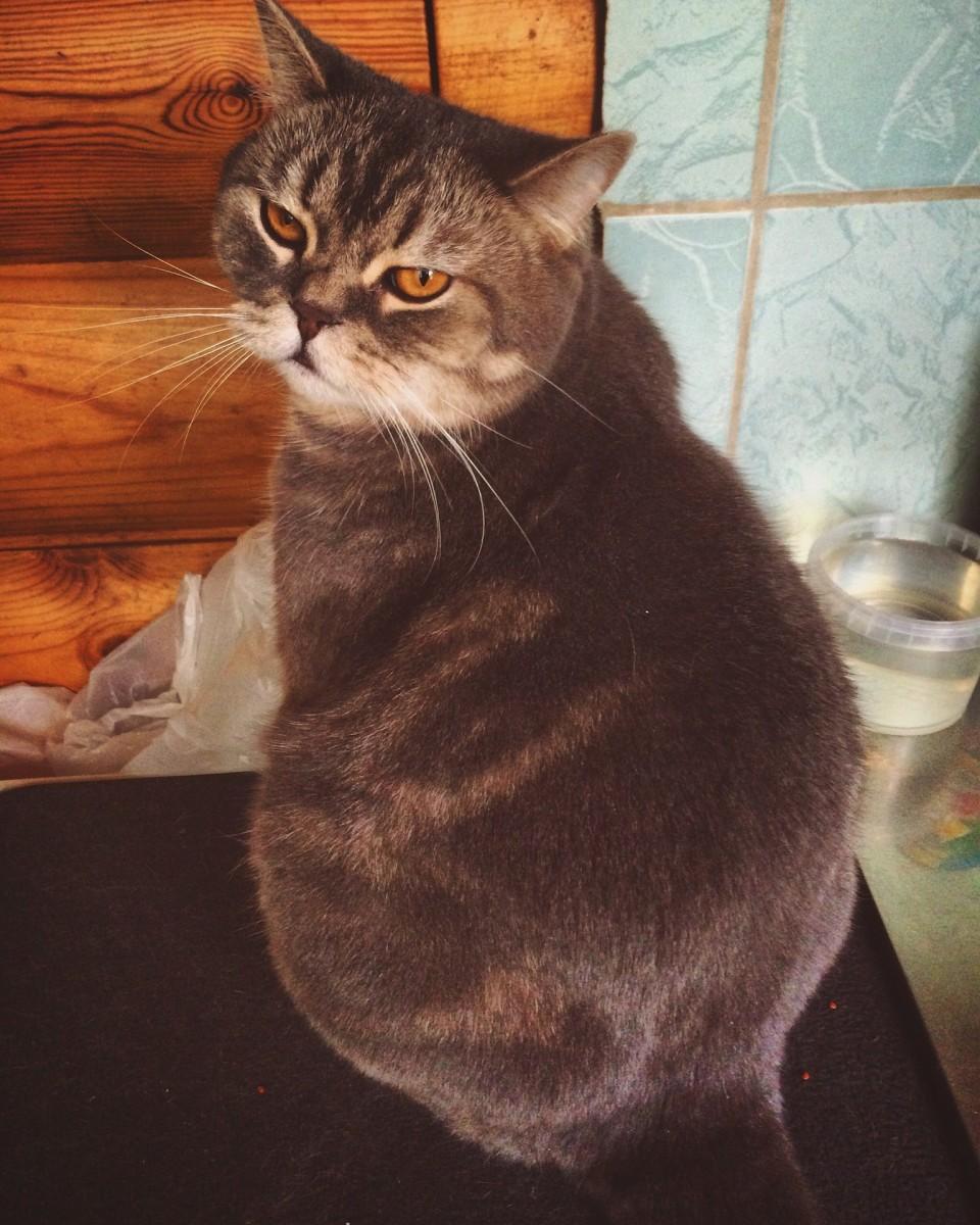 the-cats-liver-fat-beware-of-cats-that-no-longer-eat