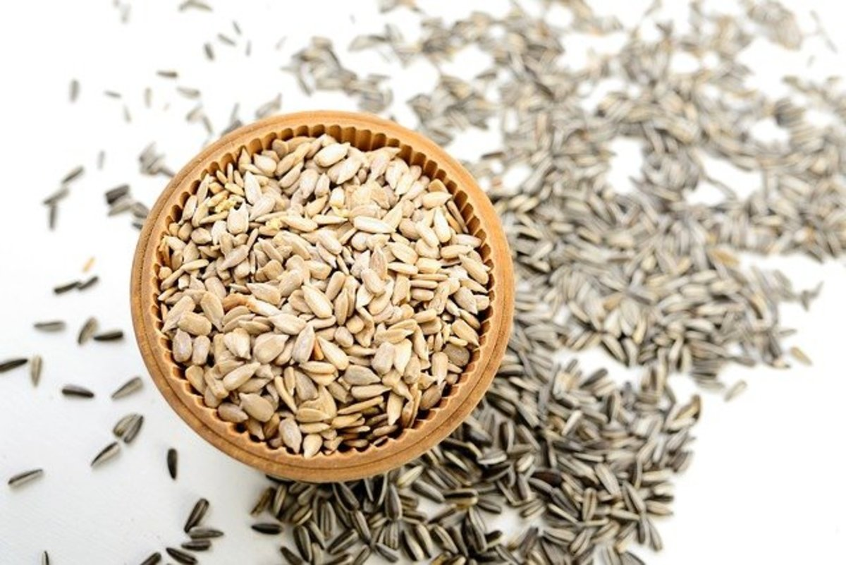 Women eat Sunflower seeds in folk magick when they wish to conceive a child.