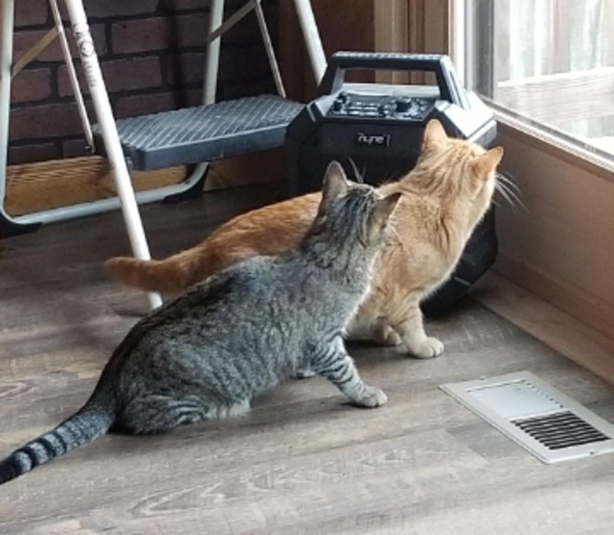 poem-chattering-kittys